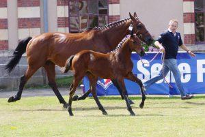 NORMANDIE HORSE SHOW